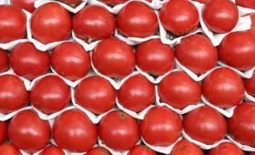 Плодоовощной союз попросил временно запретить импорт томатов в Россию
