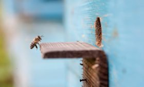 Россиянин хочет проверить, может ли улей с пчелами долететь до Марса