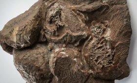 Ученые на синхротроне просветили яйца динозавров