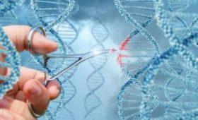 Разрывы ДНК кишечной палочки стали битами информации