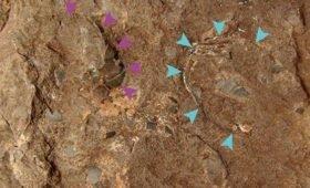 В Японии нашли самое маленькое яйцо динозавра