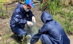 Следы плутония из поврежденных реакторов Фукусимы найдены по всей Японии
