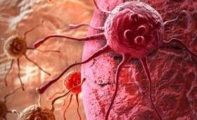 Найдены клетки, способные уничтожать сразу десять видов рака