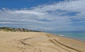 Женщина нашла на пляже необычных существ