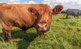 В Финляндии откроют первую АЗС, перерабатывающую газ из коровьего навоза